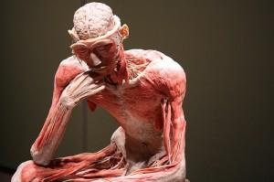Bodies Exhibit NYC - Bodies The Exhibition
