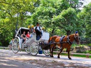 Horse Drawn Carriage Ride in Central Park