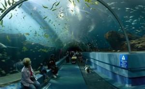 Underwater Tunnel at the New York Aquarium