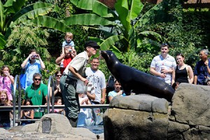California Sea Lion / Seal Feeding Show at the Central Park Zoo