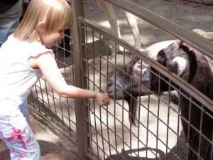 Petting Zoo in Central Park - Tisch Children's Zoo